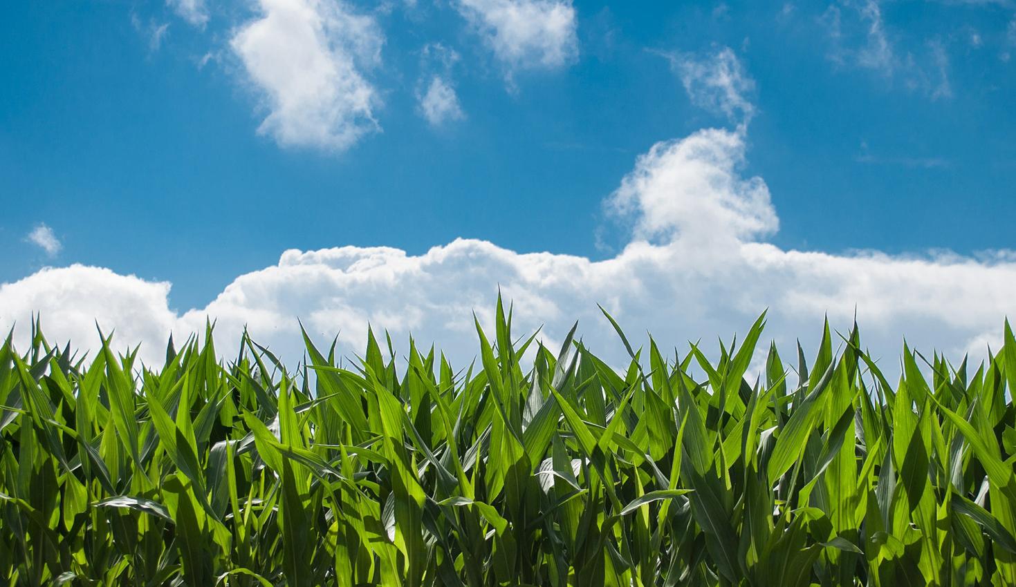 LA AGRICULTURA ES EL ARTE DE SABER ESPERAR